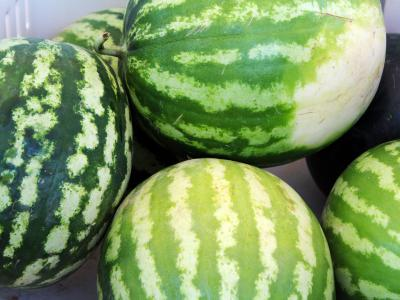 The Gilcrease Orchard Watermelon