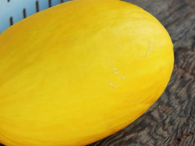 The Gilcrease Orchard Melon