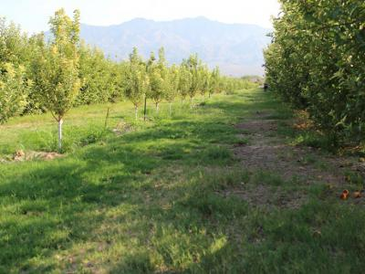 The Gilcrease Orchard