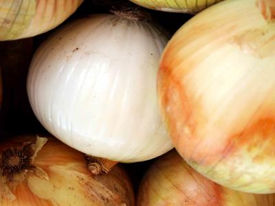 The Gilcrease Orchard Onions